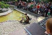 Mannheim. 05.06.17 | ID 009 |<br /> Luisenpark. Fütterung der Pinguine<br /> <br /> Bild: Markus Proßwitz 05JUN17 / masterpress
