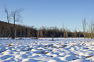Chester, New York - A wetland area covred in snow at Goosepond Mountain State Park on March 9, 2013.