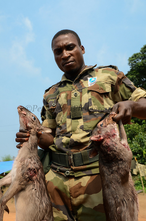 Bushmeat inspection & Western blue duiker (Philantomba congica)<br /> Yengo Eco Guard control point<br /> Odzala - Kokoua National Park<br /> Republic of Congo (Congo - Brazzaville)<br /> AFRICA