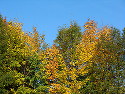 CZECH REPUBLIC NEDVEZI 14AUG08 - Autumn colours in Nedvezi village in Vysocina, Czech Republic.....jre/Photo by Jiri Rezac....© Jiri Rezac 2008....Contact: +44 (0) 7050 110 417..Mobile:  +44 (0) 7801 337 683..Office:  +44 (0) 20 8968 9635....Email:   jiri@jirirezac.com..Web:    www.jirirezac.com....All images © Jiri Rezac 2008. All rights reserved.