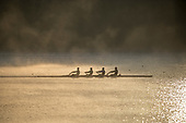 New Zealand Rowing Team Practice Sessions
