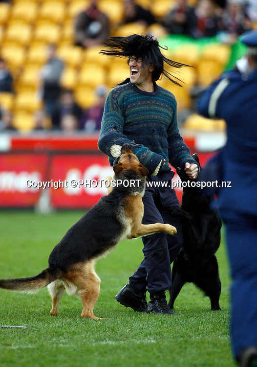 Police dog display team. NRL. Vodafone Warriors v Canterbury Bulldogs, Mt Smart Stadium, Auckland, New Zealand. Sunday 12 July 2009. Photo: Simon Watts/PHOTOSPORT Editorial Use Only