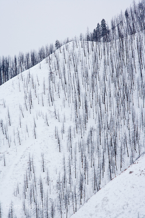 Burnt trees are seen on the ridges above Glenwood Springs, Colorado in winter.