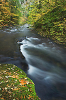 Whatcom Creek in autumn, Whatcom Falls Park Bellingham, Washington