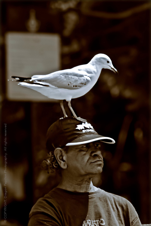 candid photograph: man with gull sitting on his head at Circular Quay, Sydney, Australia