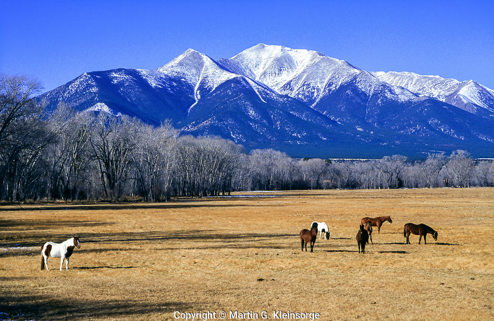 Horses grazing in the Upper Arkansas Valley below 14,197 ft. Mount Princeton.  Near Buena Vista, Colorado.