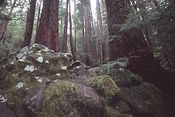 Lover's Lane near Sol Duc Falls, Olympic National Park, Washington, US