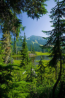 Mount Washington and Paradise Meadows are framed within a forest canopy while hiking along the trails of Paradise Meadows.  Mount Washington, The Comox Valley, Vancouver Island, British Columbia, Canada.