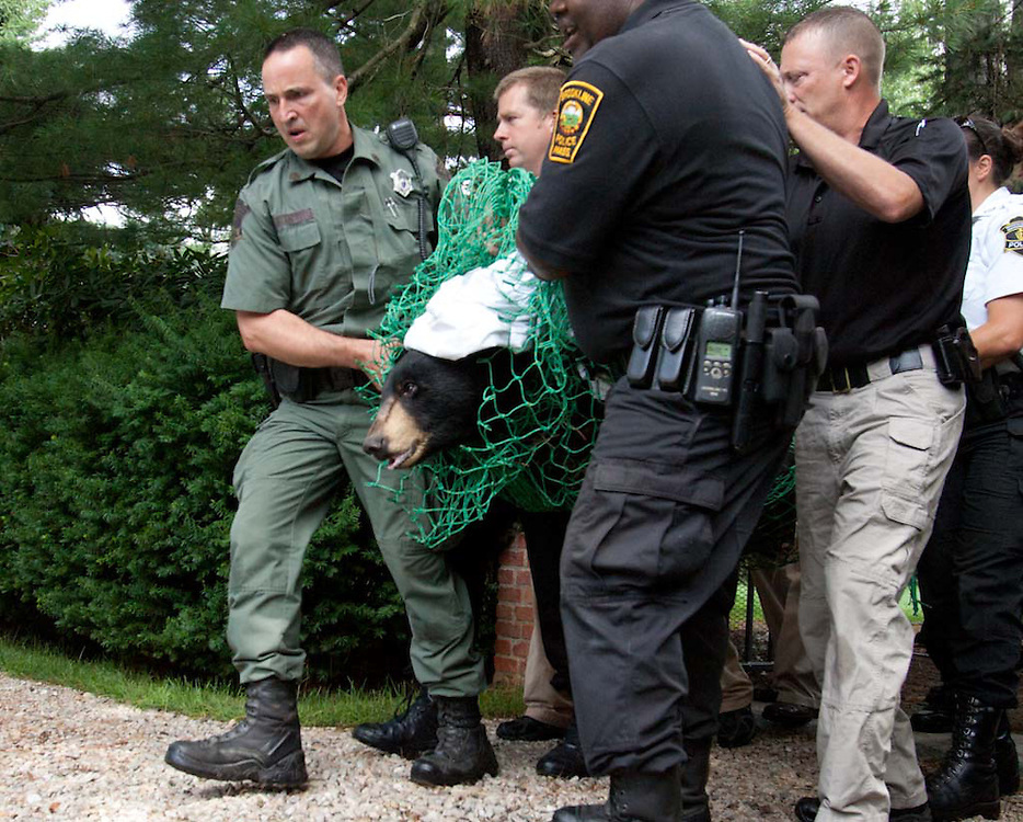 Brookline, MA 06/26/2012<br />