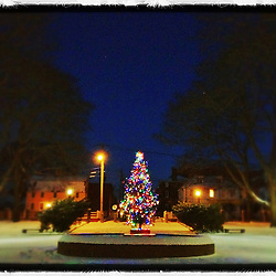 """A Christmas tree lit up in Prescott Park, Portsmouth, New Hampshire. iPhone photo, suitable for print reproduction up to 8"""" x 10""""."""