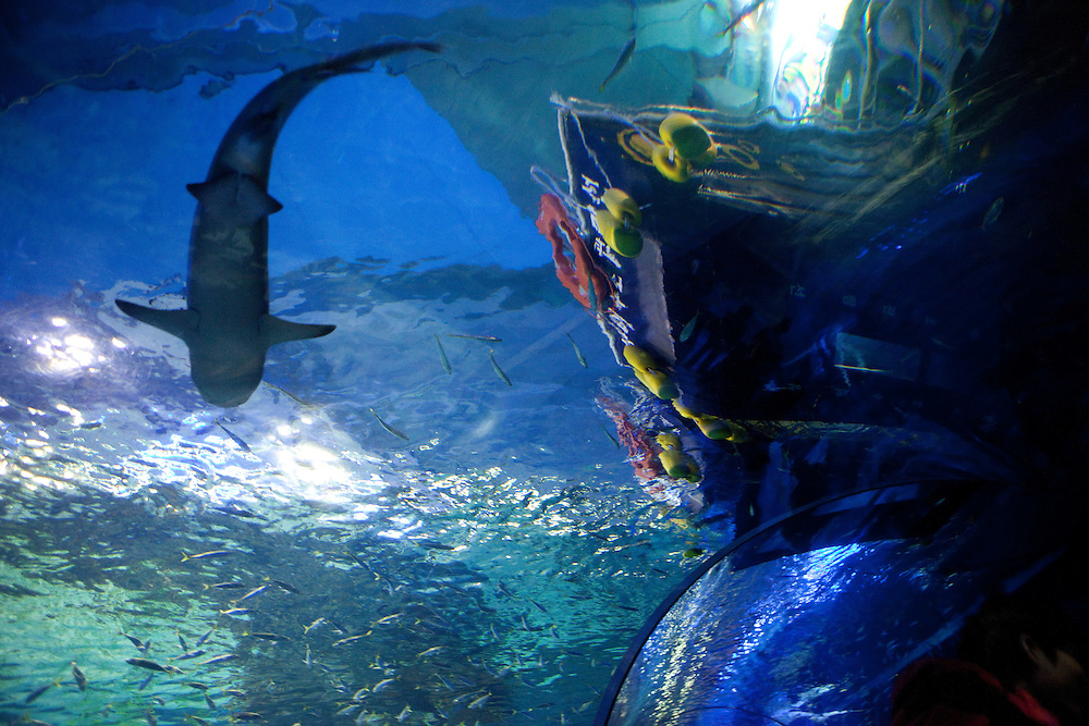 Busan Aquarium, a large fish tank with 50.000 creatures, located at Haeundae Beach/ Busan, South Korea, Republic of Korea, KOR, 13 February 2010.