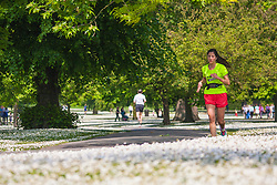 Regent's Park, London, May 17th 2014. A woman runs through Regent's Park in London, where the lawns are carpeted with daisies.
