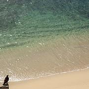 Eagle searching pray at Playa Palmilla. San Jose del Cabo