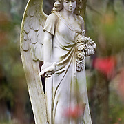 Angel funerary statue at Bonaventure Cemetery in Savannah, Georgia