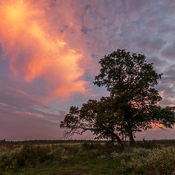 Tree in a field at sunset in Halifax, Massachusetts.