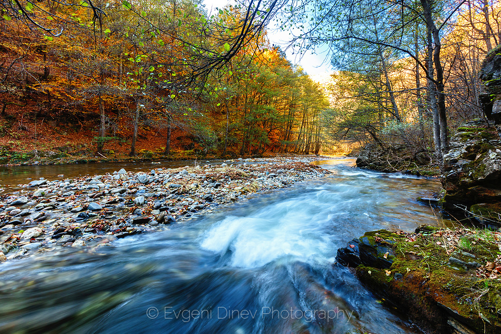 River with a stone bank in an autumn forest
