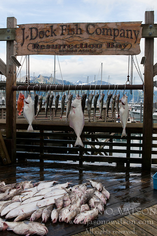 Catch of the day, fish hanging on a pier, Seward, Alaska, United States of America