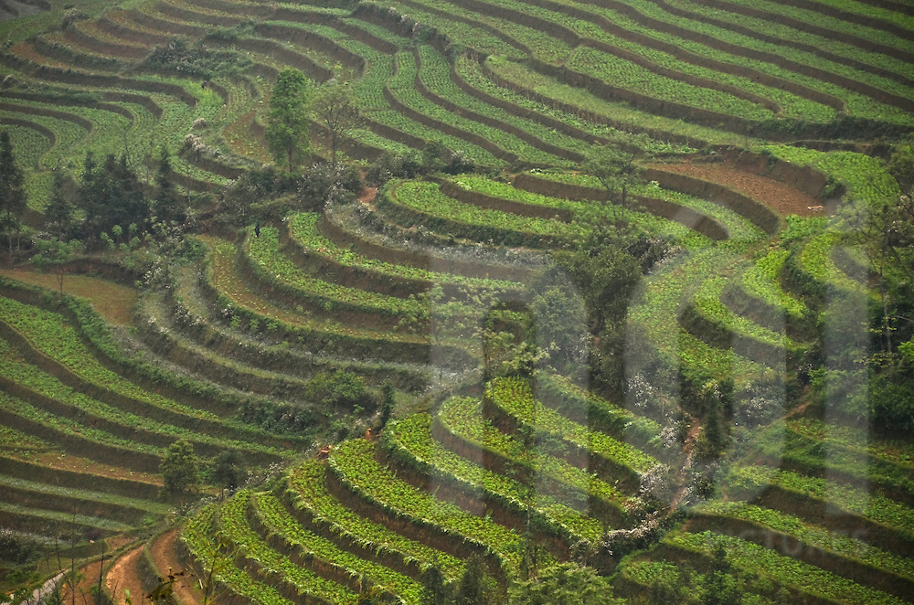 Terraces of plantation in Bac Ha district, Lao Cai province, North Vietnam.