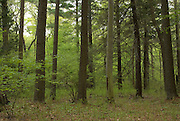 Woodland in the Ipswich River Wildlife Sanctuary, Topsfield, Massachusetts