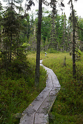Boarded hiking trail through bog section of Raspberry Island, Isle Royale National Park, Michigan, United States of America