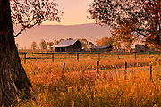 Morning light warms the horse farm near the Moulton Barns, Grand Teton National Park