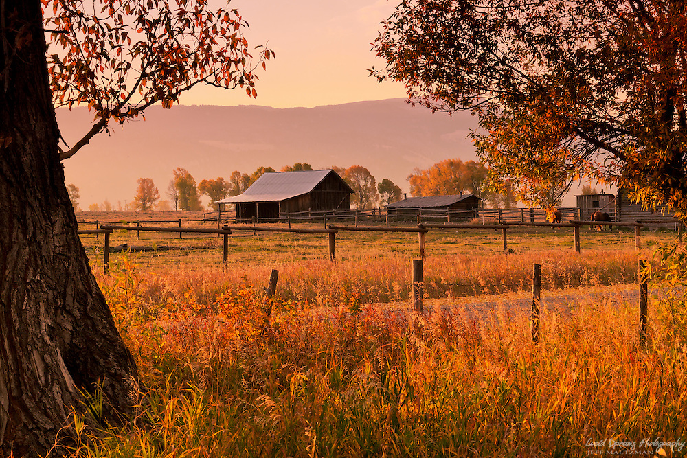 Morning light warms the horse farm near the Moulton Barns, Grand Teton National Park