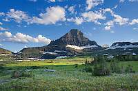 Alpine meadows at Logan Pass, Mount Reynolds is in the distance, Glacier National Park Montana USA