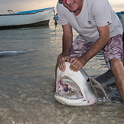 Tiger sharks pulled up on the beach by fisherman along La Preneuse Beach in Black River.