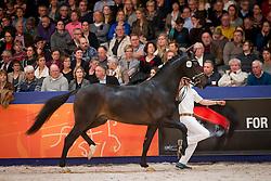 463, Impression<br /> Derde bezichtiging Dressuurhengsten<br /> KWPN Hengstenkeuring - 's Hertogenbosch 2016<br /> © Hippo Foto - Dirk Caremans<br /> 05/02/16