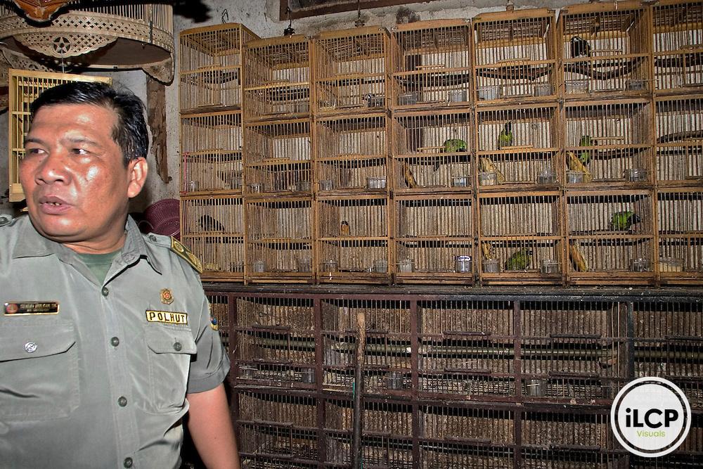 Indonesia, Sumatra, Lampung bird market, wildlife police