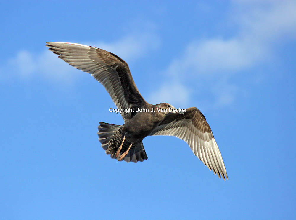 Seagull soaring against blue sky