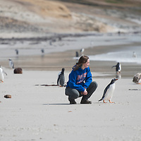 Biology students Gretel Care and Lauren Radding, Raptor Research study on Saunders Island, Falkland Islands, John Kelly photo.