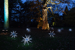 © Licensed to London News Pictures. 21/11/2017. London, UK. Illuminated trees on display at the opening of Christmas at Kew at Royal Botanical Gardens, Kew. The spectacular displays are illuminated by over one million tiny twinkling lights placed all over Kew Gardens - open Wednesdays – Sundays from 22 November 2017 – 2 January 2017. London, UK. Photo credit: Ray Tang/LNP