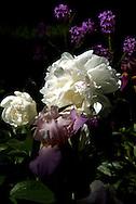 artistic image of flowers in garden