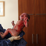 A newborn baby is held straight after delivery in a hospital environment . Photo Tim Clayton