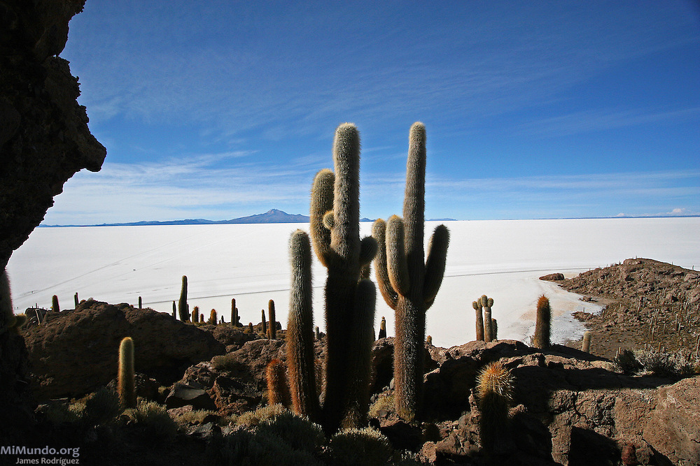 The Isla del Pescado (Fish Island), or Cujiri, is an island populated by giant cacti in the middle of the Salar de Uyuni, the world's largest salt flat. The Salar de Uyuni sits at 3,600 meters above sea level and has a total surface area of 10,582 square kilometers.