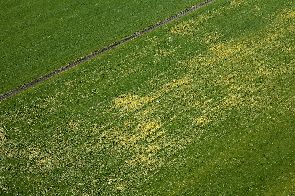 Nederland, Noord-Holland, Schermer, 28-04-2010; Polder De Schermer weiland met gele paardenbloemen..The Schermer polder,  meadow with yellow dandelions..luchtfoto (toeslag), aerial photo (additional fee required).foto/photo Siebe Swart