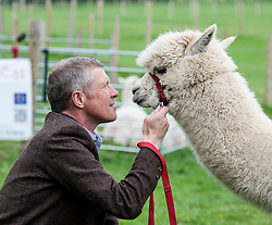 Scottish Lib Dem leader Willie Rennie gets more than he bargained for on a campaign visit to Bobcat Alpacas in the Pentland Hills outside Edinburgh.<br /> <br /> &copy; Dave Johnston/ EEm