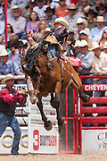 Bareback rider Tanner Aus of Granite Falls, Minnesota hangs on to win the Bareback Championships at the Cheyenne Frontier Days rodeo in Frontier Park Arena July 26, 2015 in Cheyenne, Wyoming. Frontier Days celebrates the cowboy traditions of the west with a rodeo, parade and fair.