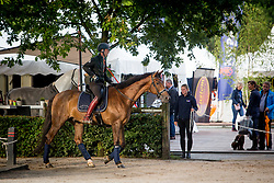 Gottmer Nars, NED, Dicaprio Swing<br /> WK Ermelo 2019<br /> © Hippo Foto - Sharon Vandeput<br /> 2/08/19