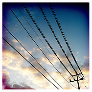 Birds on a Wire - Houston, TX