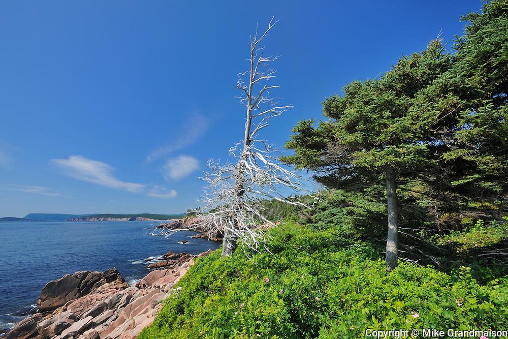 Shoreline along the Cabot Strait on the Cabot Trail at Lackies Cove<br /> Cape Breton Highlands National Park<br /> Nova Scotia<br /> Canada