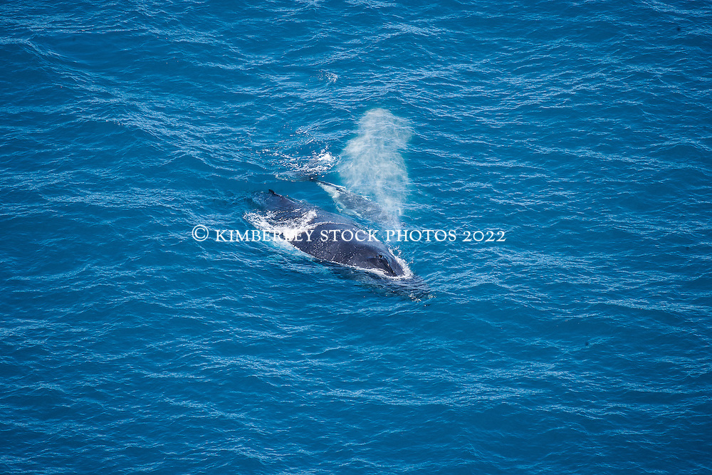A humpback whale and calf surface off Broome's Cable Beach.
