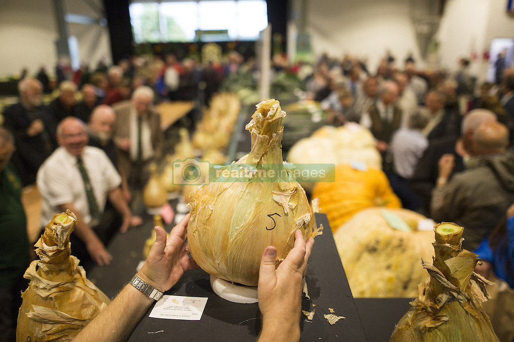 September 16, 2016 - Harrogate, Yorkshire, UK - Harrogate UK. Picture shows the first prize winning onion that weighed 15.10 kg at the Giant vegetable competition in Harrogate. The competition see's competitors from across the UK show their biggest Carrot's, Cucumbers, Cabbages, Onion's & Tomatoes competing for the title of heaviest & longest at the Harrogate Autumn Flower Show. (Credit Image: © Andrew Mccaren/London News Pictures via ZUMA Wire)