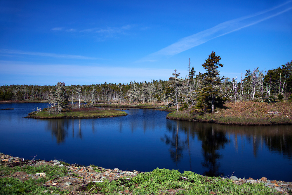 North America, Canada, Nova Scotia, Tor Bay. Bog at Tor Bay Provincial Park.