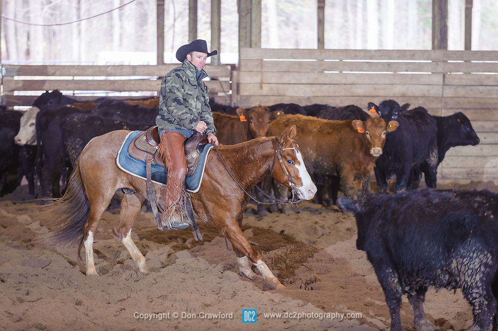 April 30 2017 - Minshall Farm Cutting 2, held at Minshall Farms, Hillsburgh Ontario. The event was put on by the Ontario Cutting Horse Association. Riding in the 5,000 Novice Horse Class is Troy Donaldson on Catt Mate owned by Melissa Caccamo.