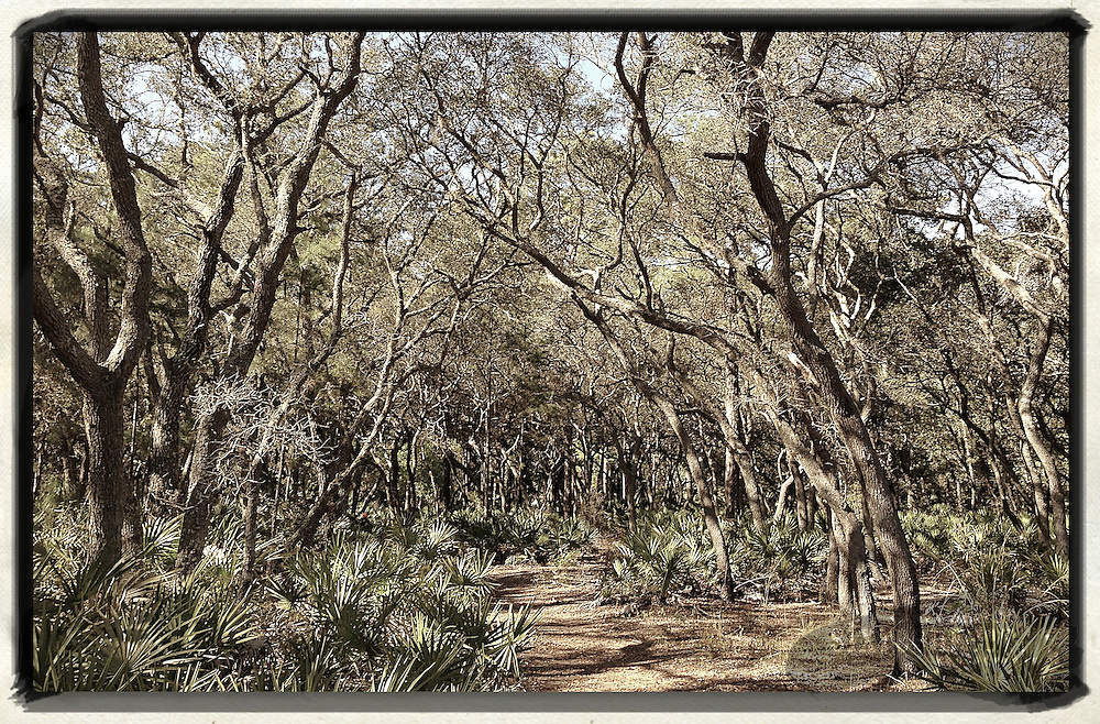 Gary Cosby Jr.  iPhone photographs A trail in Florida near the city of Orlando.