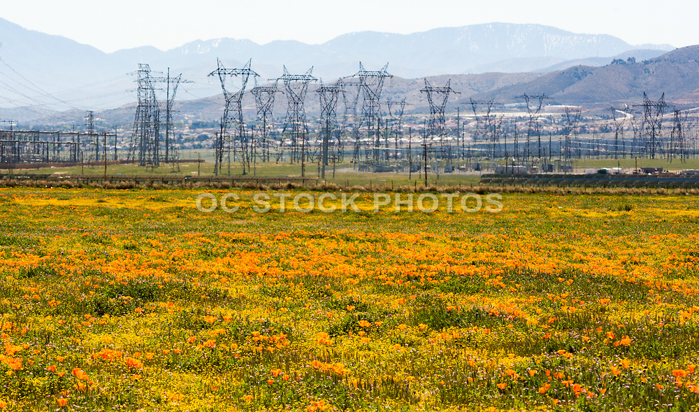 Power Poles And California Poppies In Antelope Valley