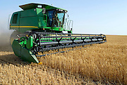 Israel, Negev Desert, combine harvester wheat Harvesting close up, May 2007