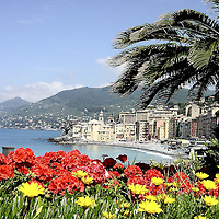 """Italian Riviera Fishing Village of Camogli, Italy<br /> In life, there is always a hard way and an easy way.  But when driving along the Italian Riviera, skip the Autostrade (freeway) in favor of the winding roads along the upper west coast of Italy.  You'll be delighted to discover all of the small fishing and resort villages.  Most are tucked into bays, built precariously on cliffs or accessible on shore only by winding, treacherous roads.  But once you stop hyperventilating, you'll love exploring towns like Camogli, whose name aptly means """"houses close together."""""""